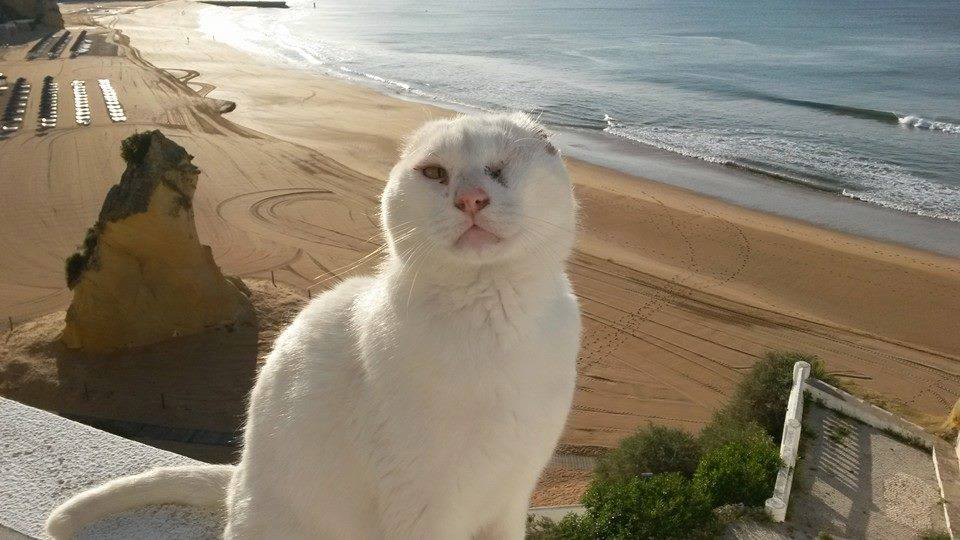 Mr No Ears - the street cat from Albufeira