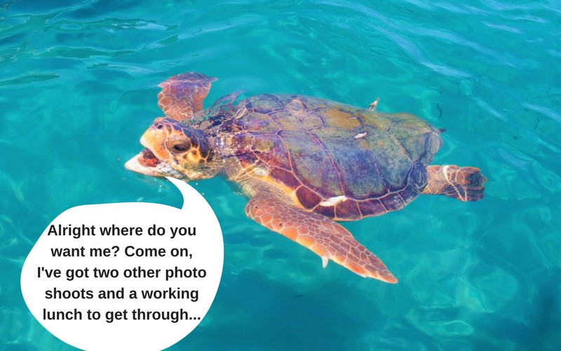 sea turtle mouth open