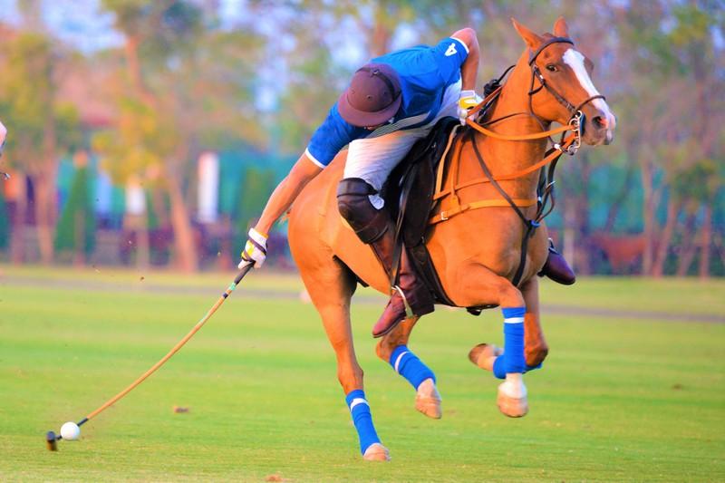 Polo pony & Rider