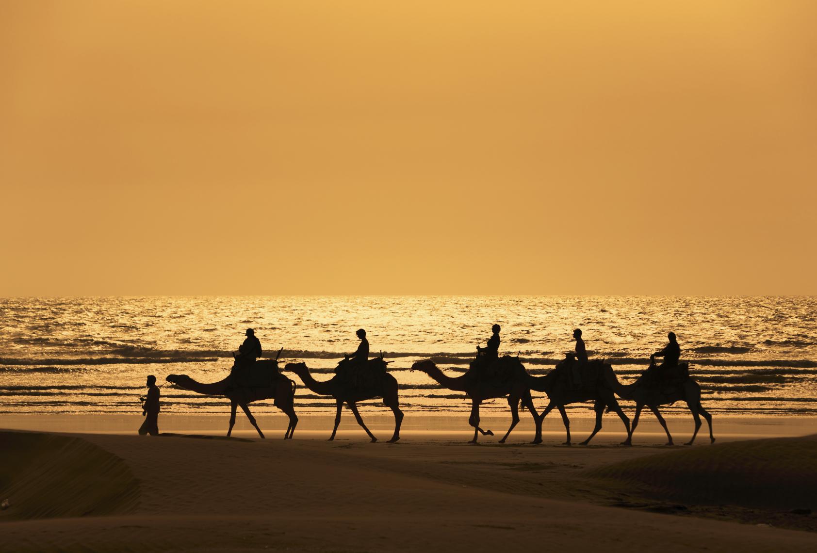 Camel ride canary islands
