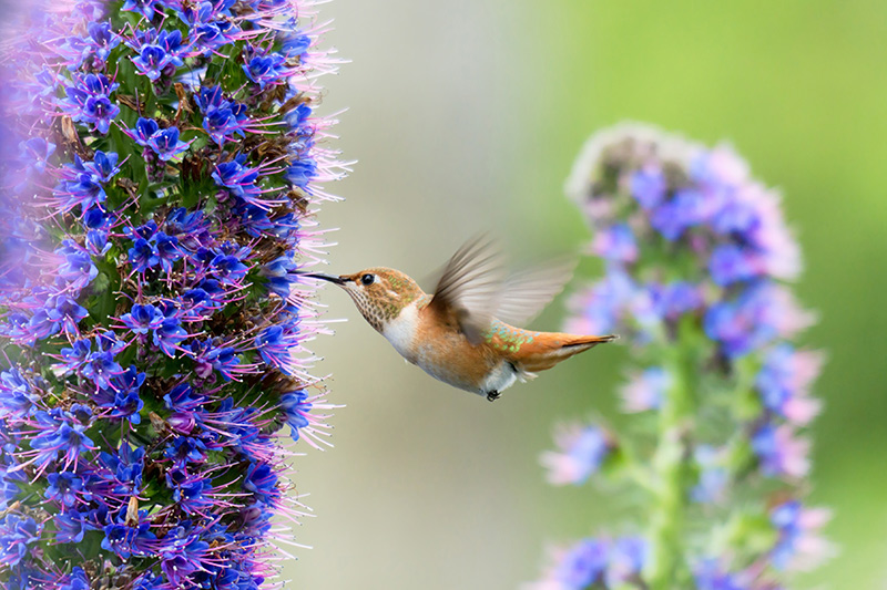Madeira wildlife