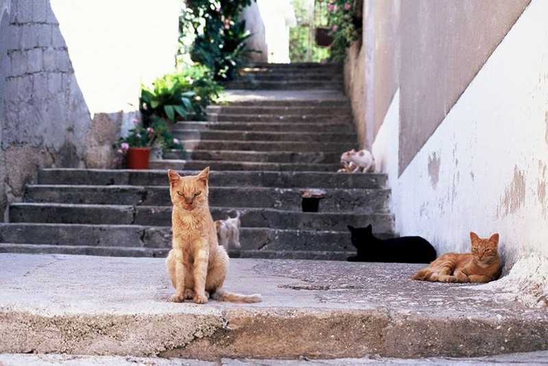Cats in Croatia