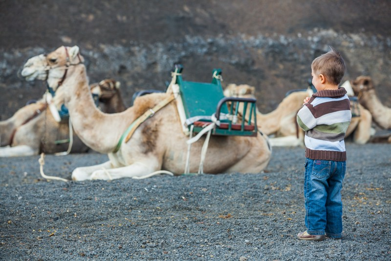 A child waiting for his turn on the camel ride, Lanzarote