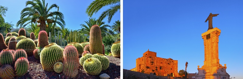 Cactus in botanical gardens and El Toro