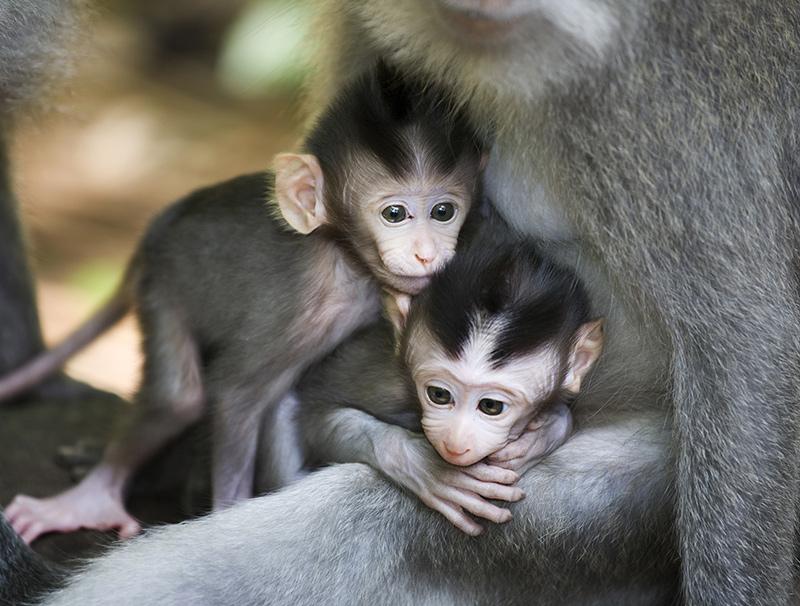 Twin baby monkeys