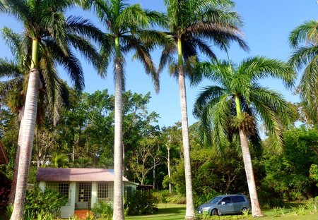 Cottage in Boscobel St Mary, Jamaica: Eden 1br villa with wifi and cable TV